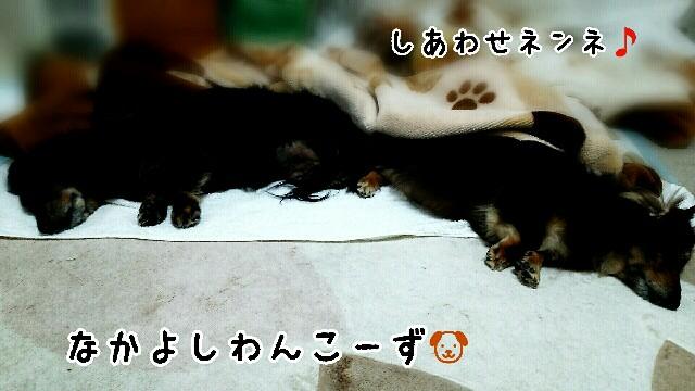 f:id:sakuratansokuclub1996:20190328085738j:image