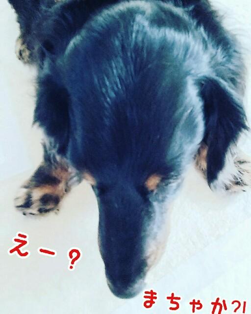 f:id:sakuratansokuclub1996:20190402082453j:image