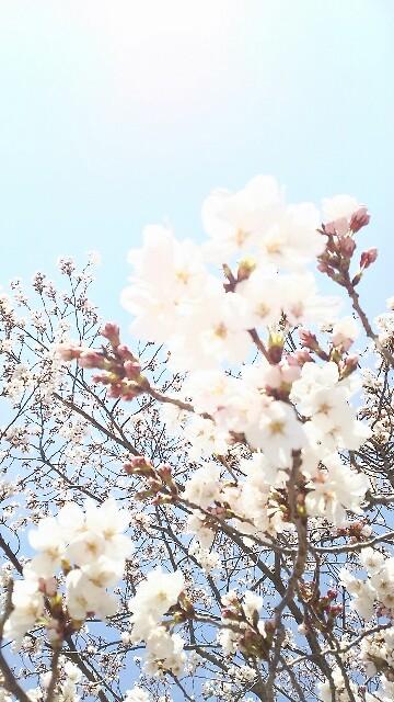 f:id:sakuratansokuclub1996:20190404235908j:image
