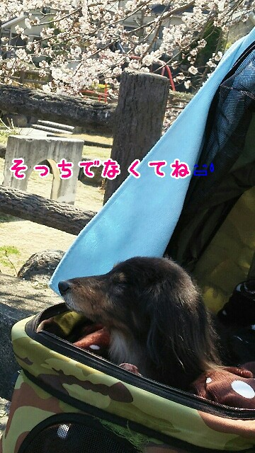 f:id:sakuratansokuclub1996:20190405001037j:image