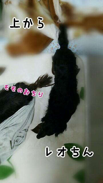 f:id:sakuratansokuclub1996:20190410115236j:image