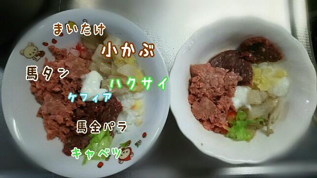 f:id:sakuratansokuclub1996:20190410115830j:image