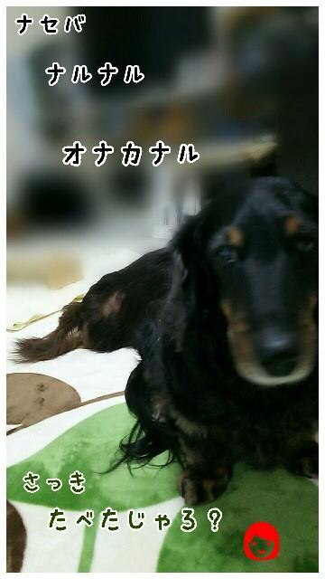 f:id:sakuratansokuclub1996:20190413203056j:image