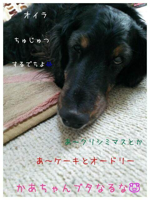 f:id:sakuratansokuclub1996:20191211212537j:image