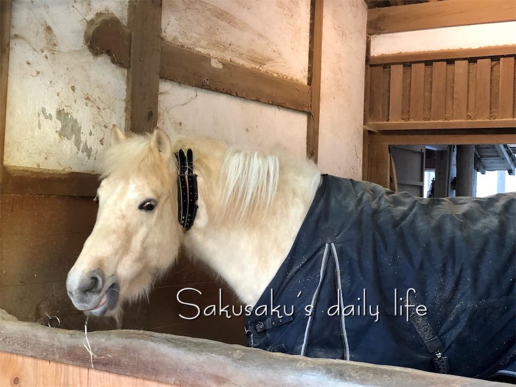 f:id:sakusaku-happy:20190210104715j:image