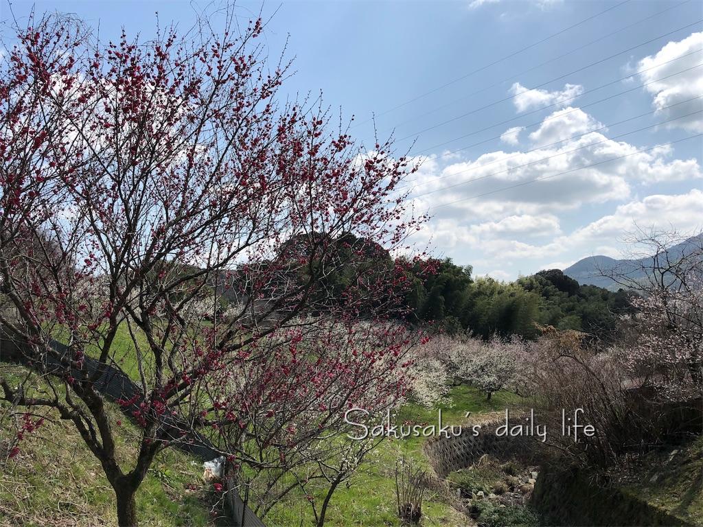 f:id:sakusaku-happy:20190216080013j:image