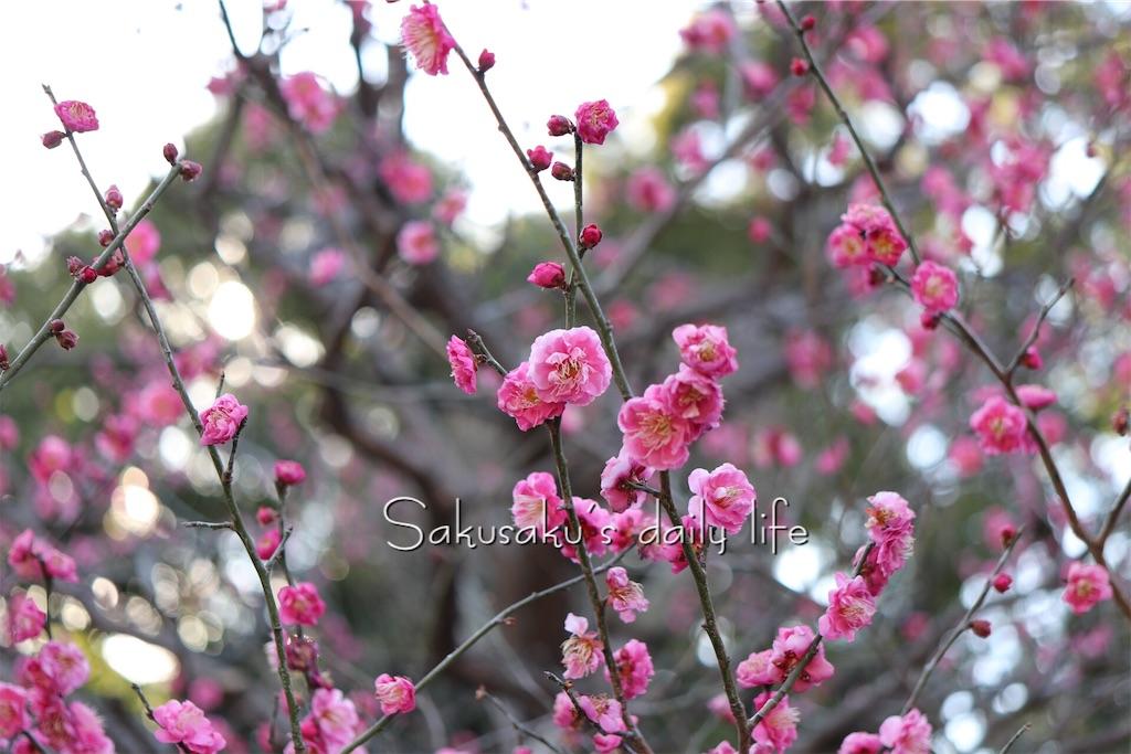 f:id:sakusaku-happy:20190219095925j:image