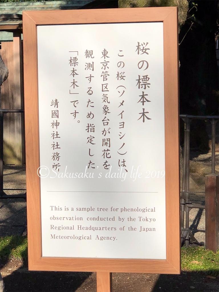 靖国神社桜の標本木1