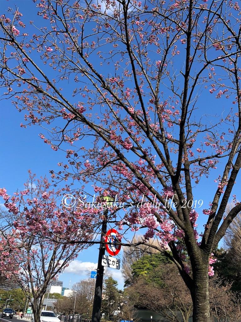 代官町通りの桜
