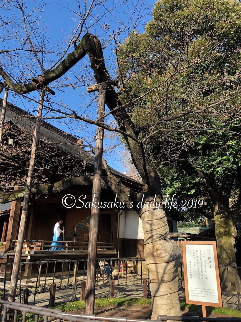 靖国神社桜の標本木2