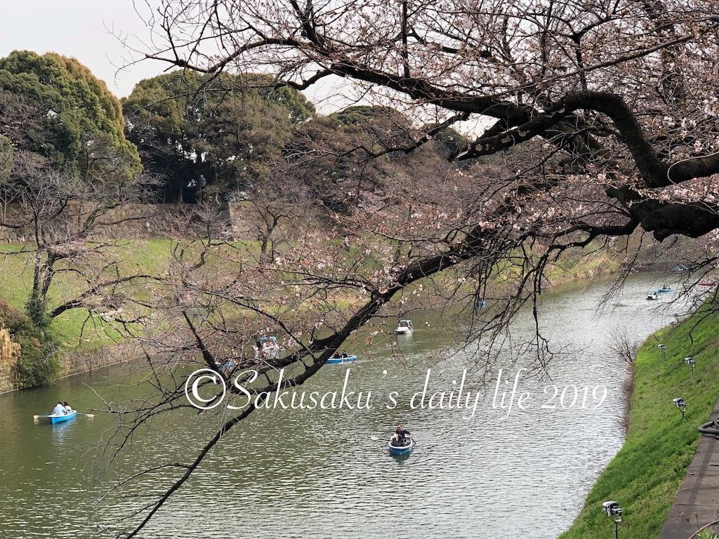 千鳥ヶ淵緑道 3部咲き