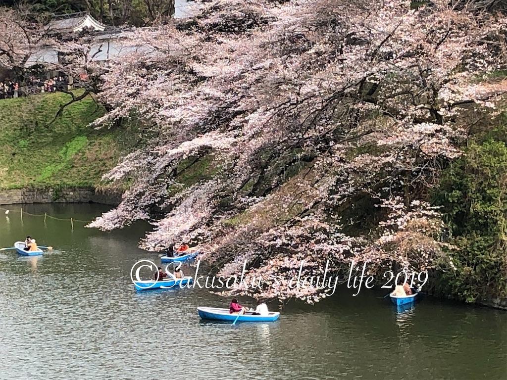千鳥ヶ淵緑道靖国通り側の桜