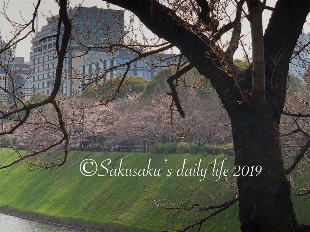 代官町通りから見る千鳥ヶ淵公園の桜