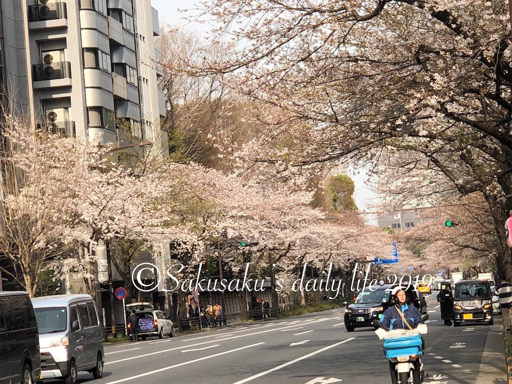 靖国通り 桜並木