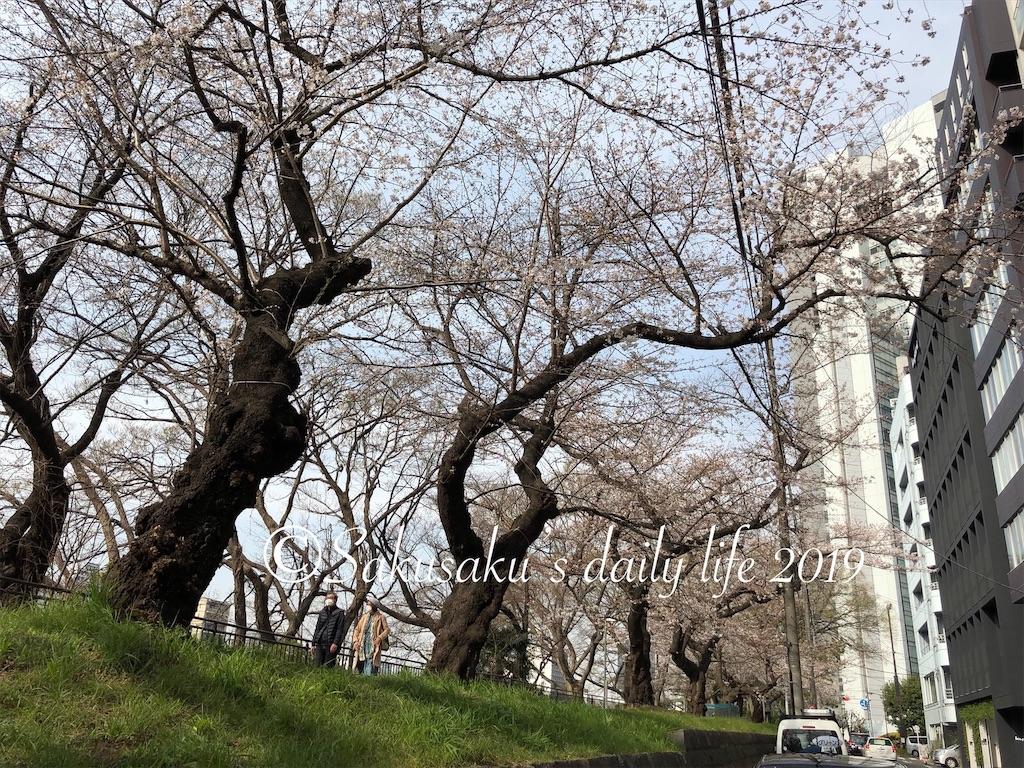 外濠公園 桜並木