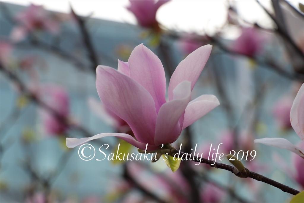 f:id:sakusaku-happy:20190327203100j:image
