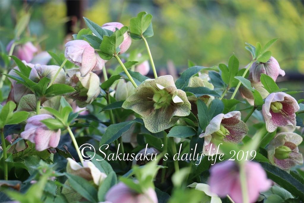 f:id:sakusaku-happy:20190327203108j:image