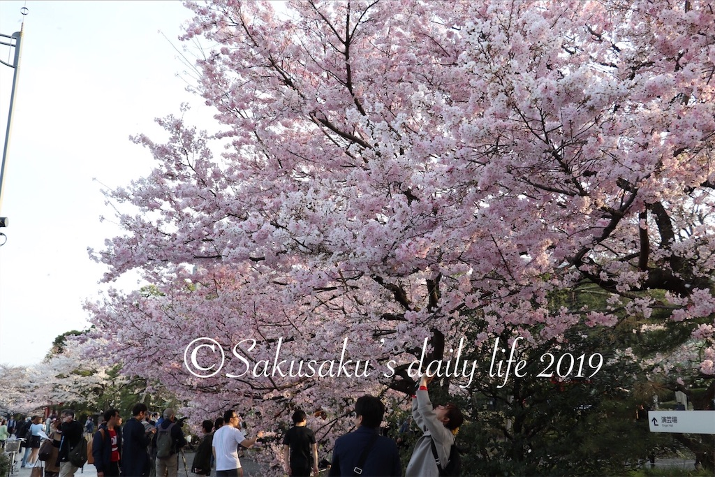 f:id:sakusaku-happy:20190327203121j:image