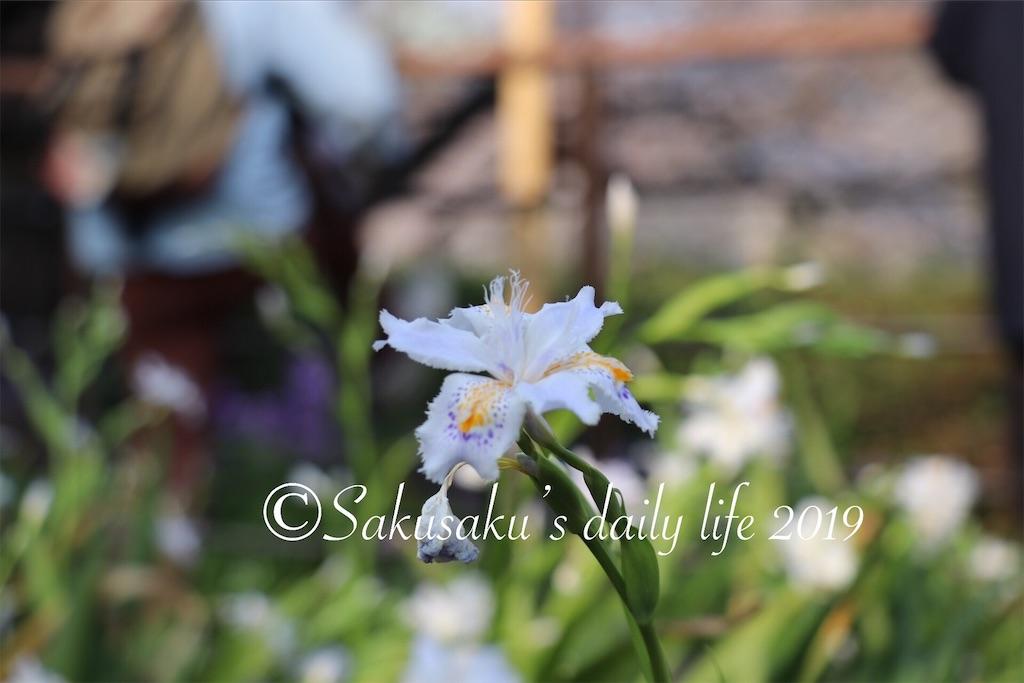 f:id:sakusaku-happy:20190327203132j:image