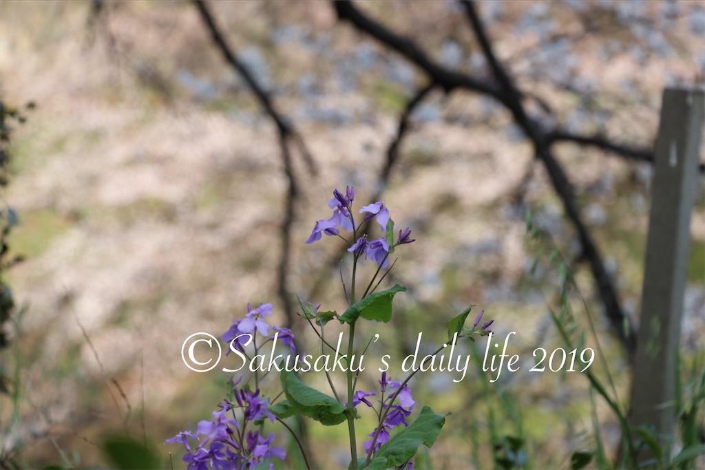 f:id:sakusaku-happy:20190327203143j:image