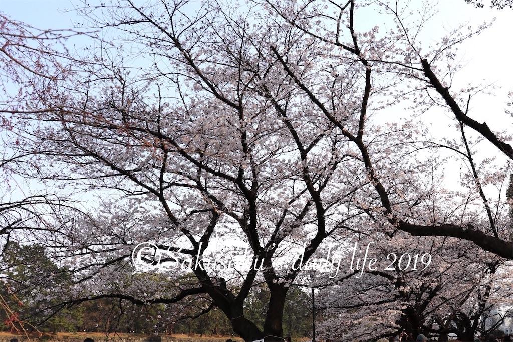 f:id:sakusaku-happy:20190327203155j:image
