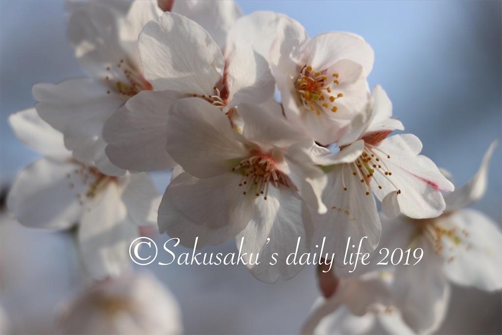 f:id:sakusaku-happy:20190327203221j:image