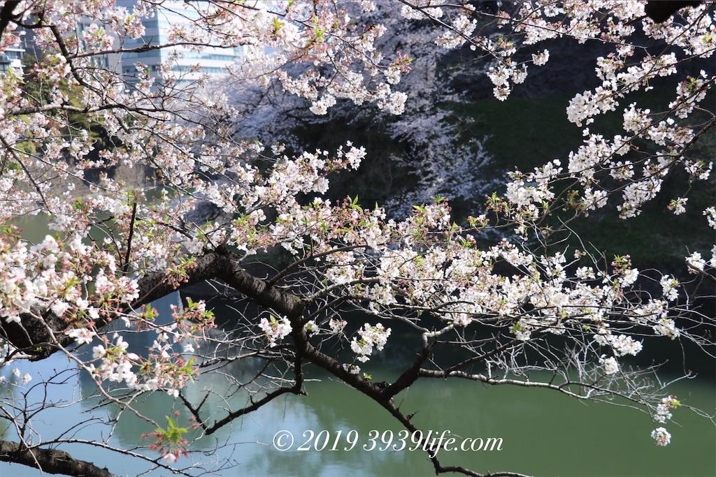 f:id:sakusaku-happy:20190409090335j:image