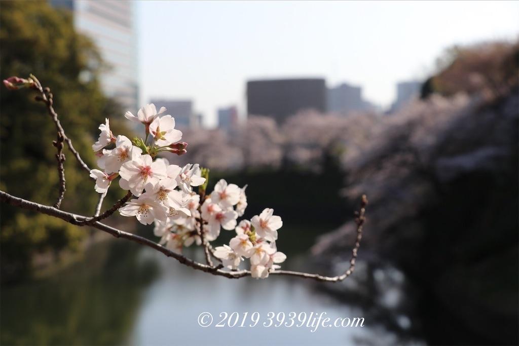 f:id:sakusaku-happy:20190409090347j:image