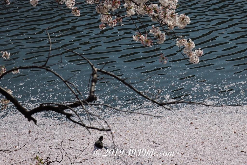 f:id:sakusaku-happy:20190409090354j:image