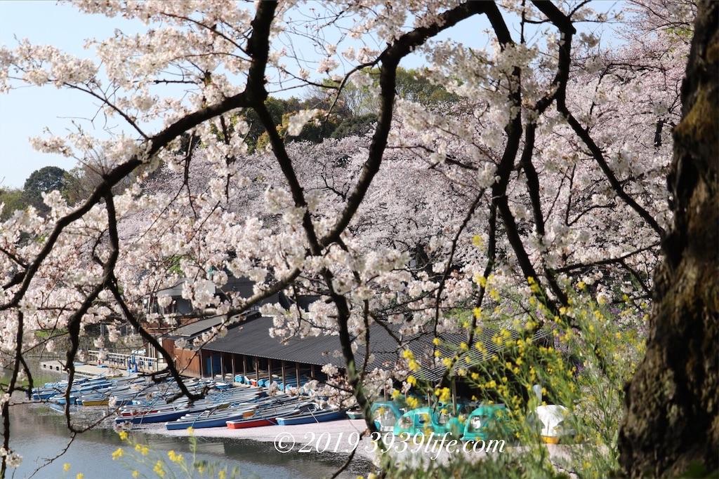 f:id:sakusaku-happy:20190409090358j:image