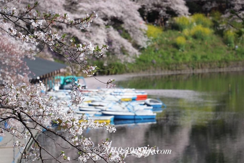f:id:sakusaku-happy:20190409090428j:image