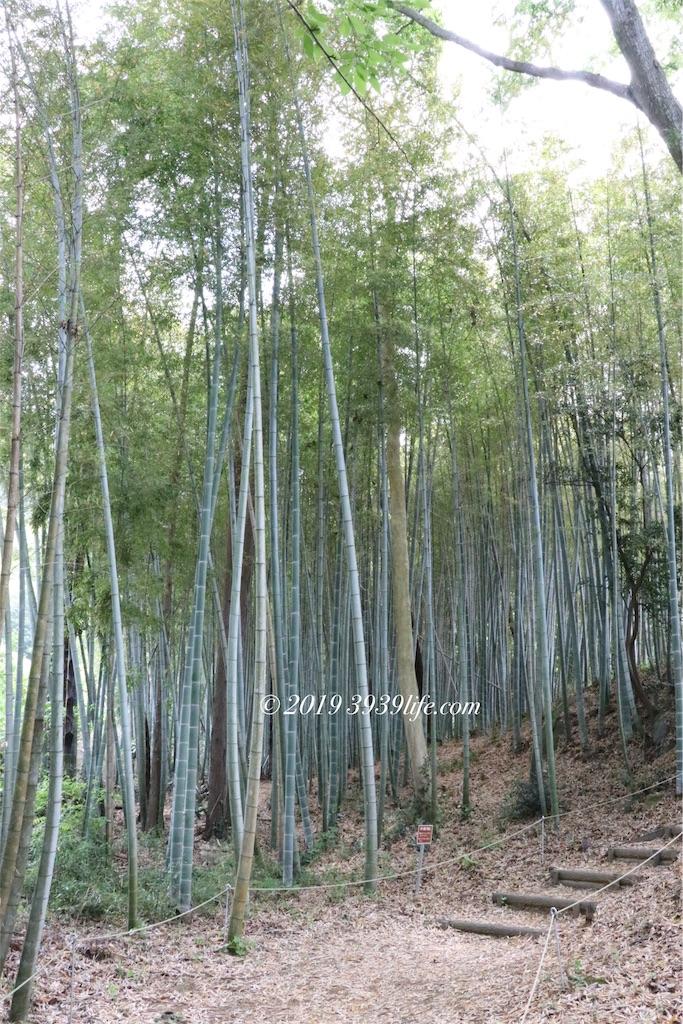 f:id:sakusaku-happy:20190510103641j:image