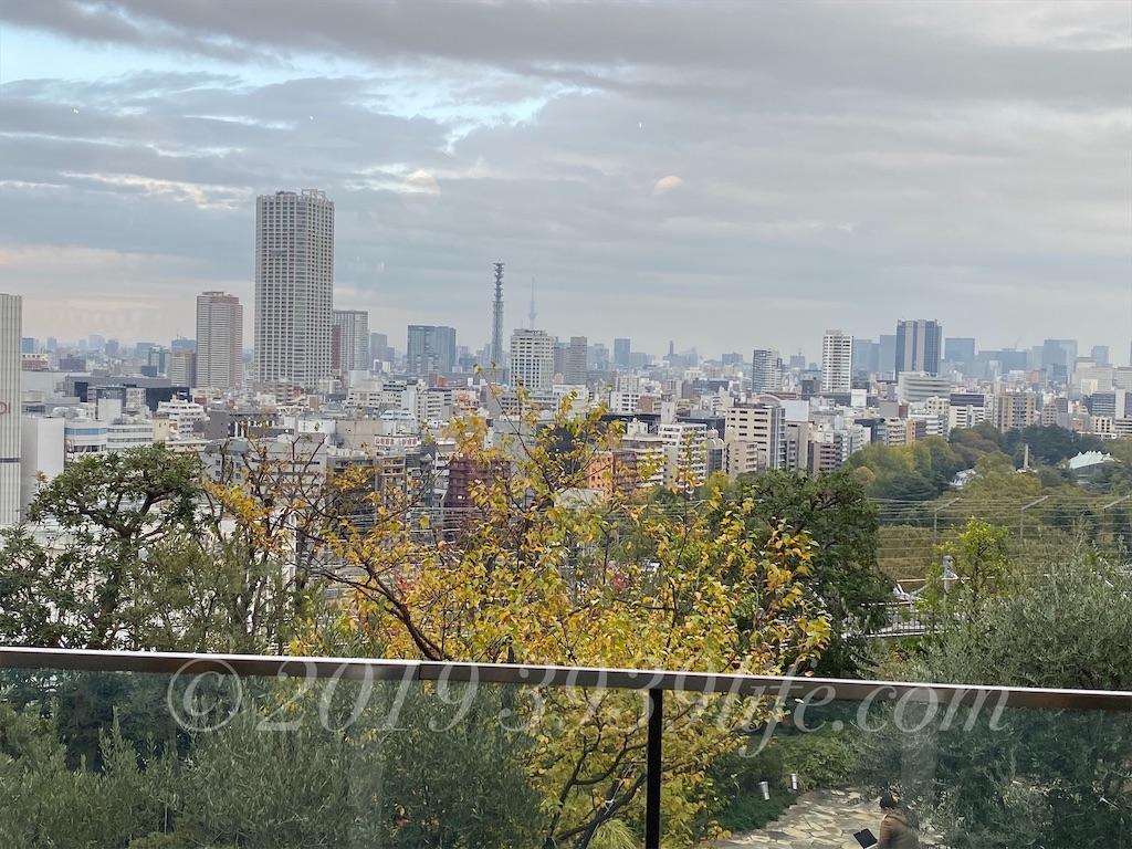 f:id:sakusaku-happy:20191116192759j:image