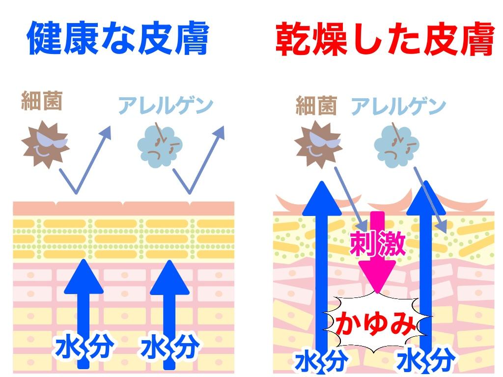 f:id:sakusaku-happy:20191126200302j:plain