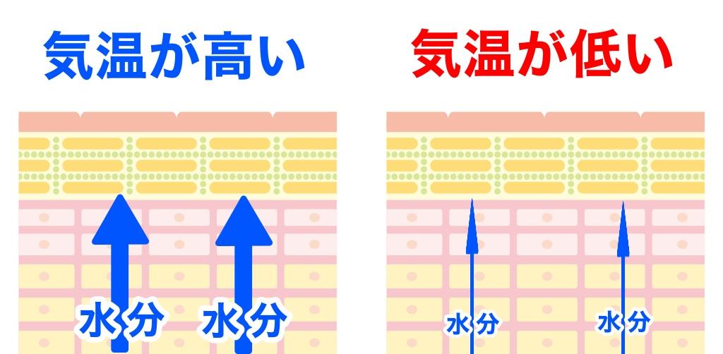 f:id:sakusaku-happy:20191127211154j:plain