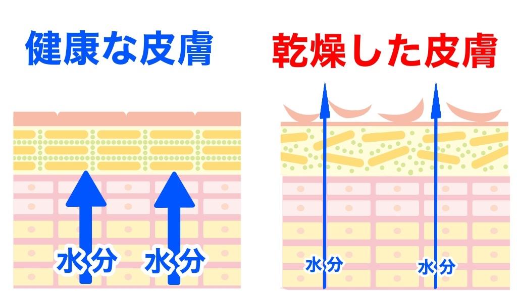 f:id:sakusaku-happy:20191127213551j:plain