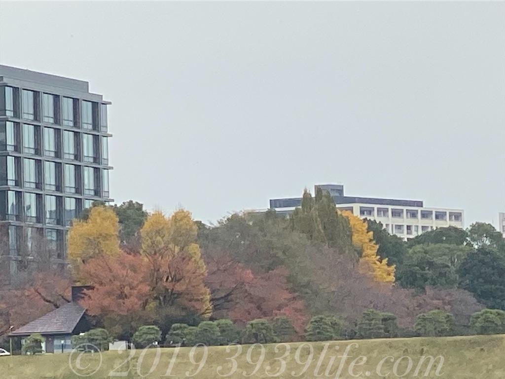f:id:sakusaku-happy:20191211142336j:image