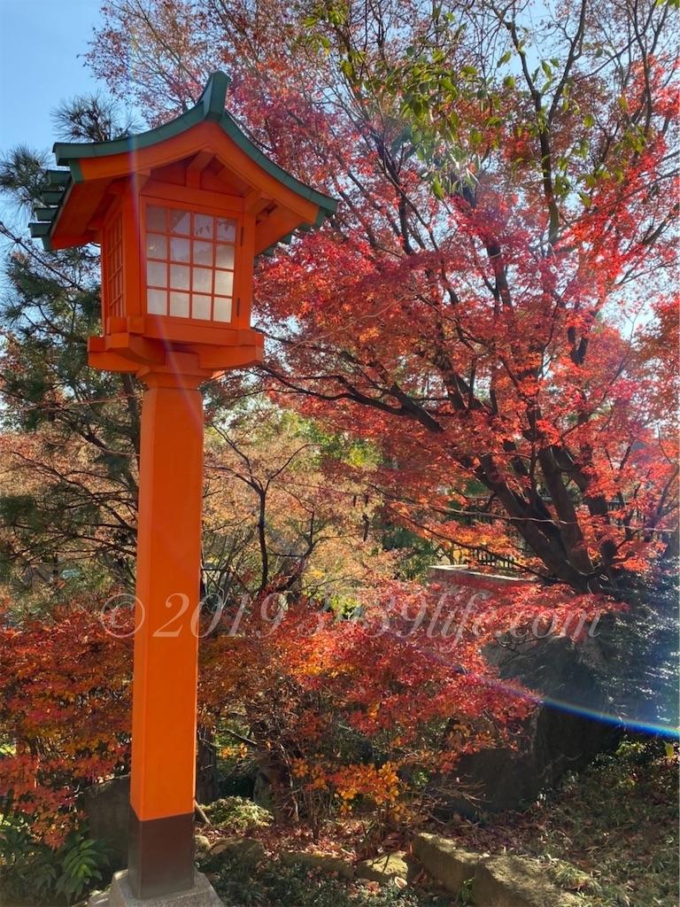 f:id:sakusaku-happy:20191221125152j:image