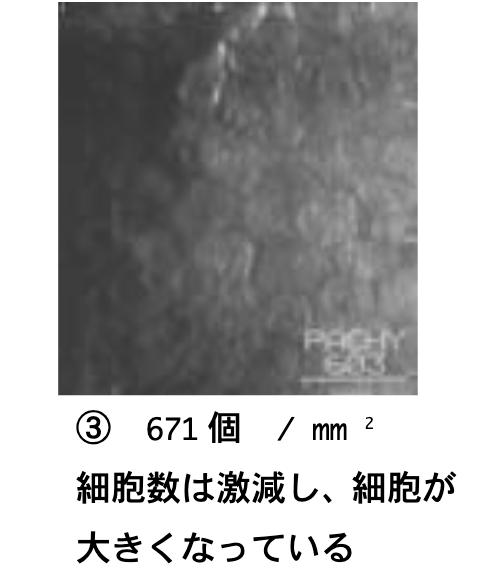 f:id:sakusaku-happy:20200121214007p:plain