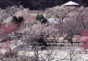 f:id:sakusaku-happy:20200201190313j:plain