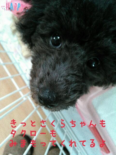 f:id:sakutakuai:20170127092253j:image