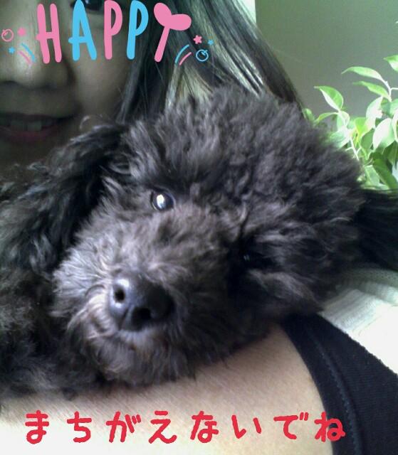 f:id:sakutakuai:20170202175330j:image