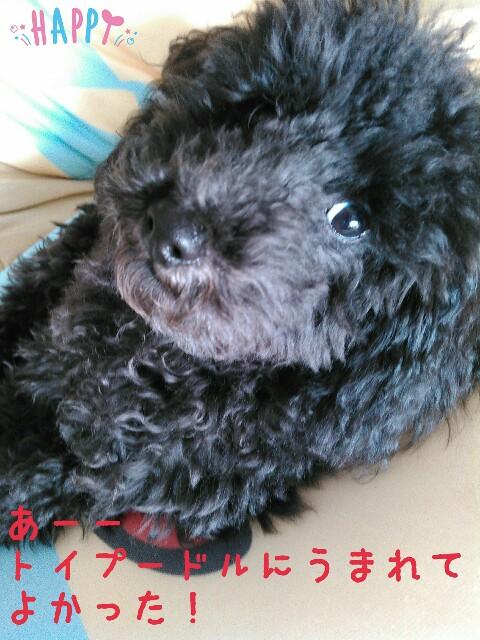 f:id:sakutakuai:20170224090619j:image