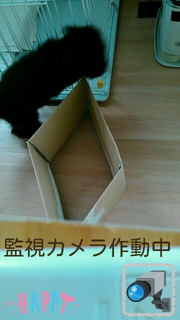 f:id:sakutakuai:20170224223734j:image