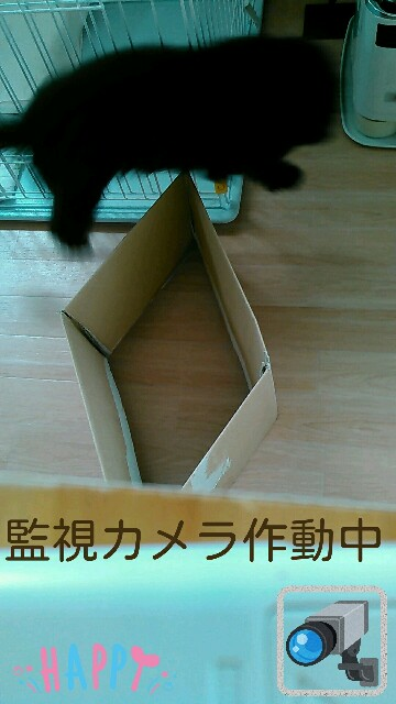 f:id:sakutakuai:20170224223757j:image