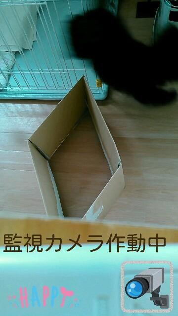 f:id:sakutakuai:20170224223816j:image