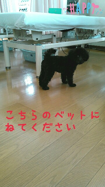 f:id:sakutakuai:20170312114625j:image
