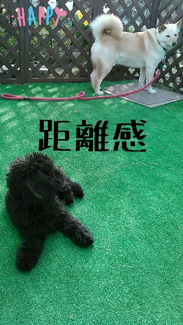 f:id:sakutakuai:20170505212052j:image