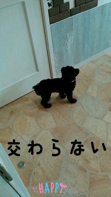 f:id:sakutakuai:20170604221017j:image