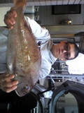 真鯛53cm